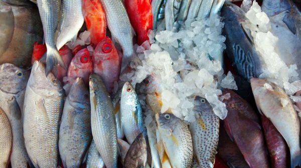 Esportazione pesce in Russia Sanzioni