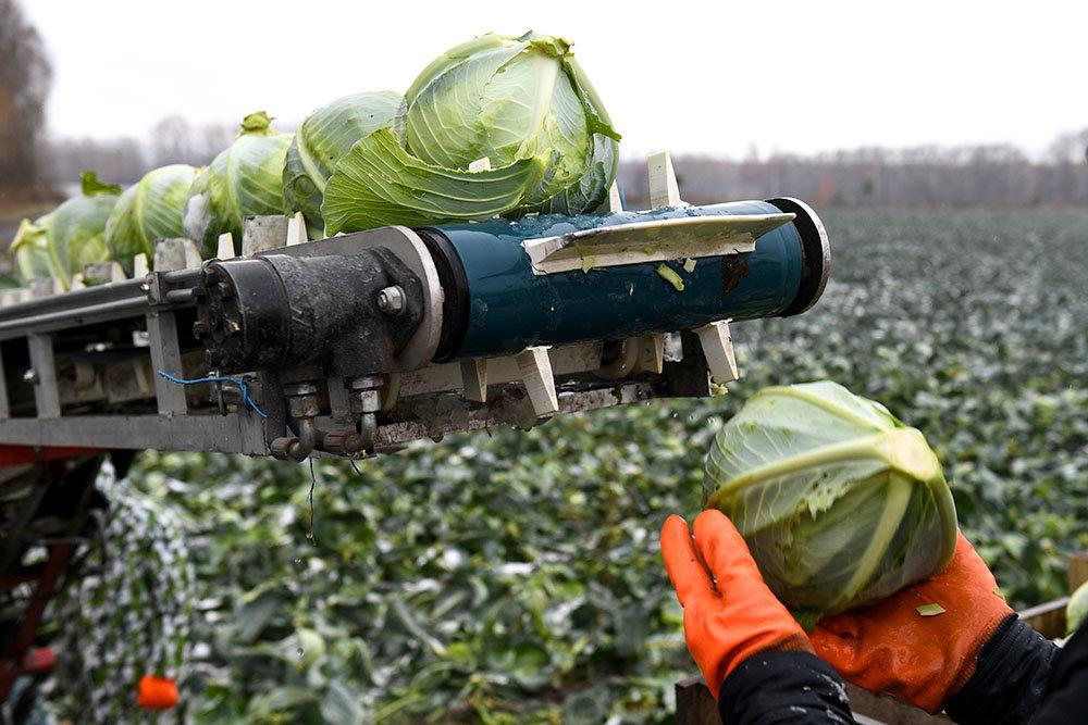 Russia esporta prodotti agricoli